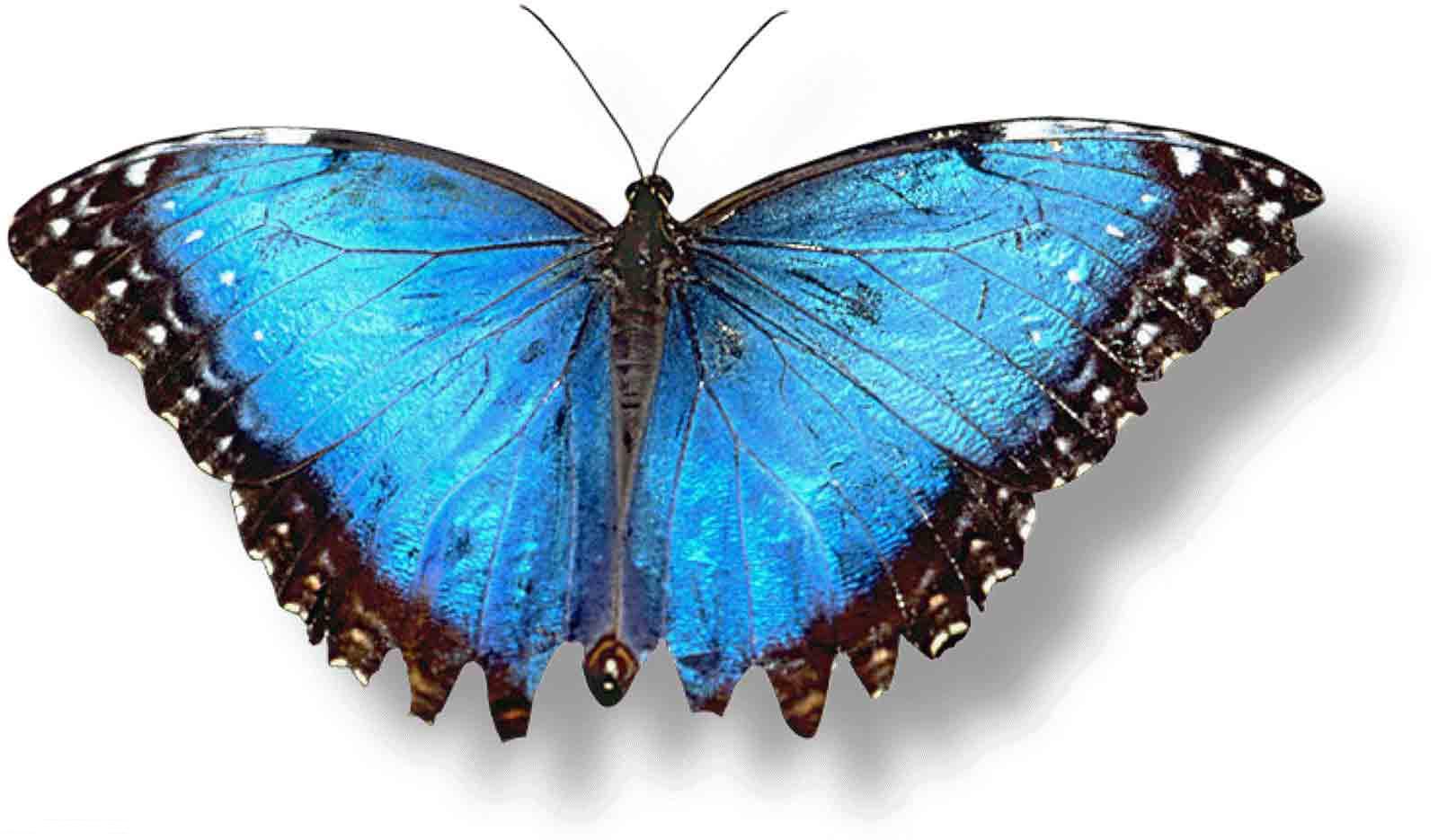 besttopdesktopbutterflieswallpaperhdbutterflywallpaper49.jpeg