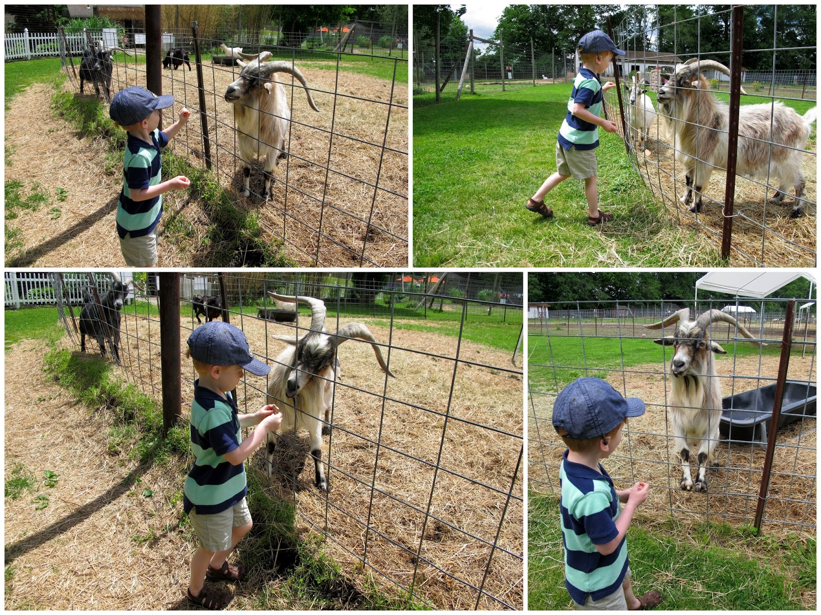Porter Feeding His New Goat Friend