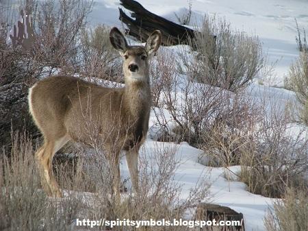 Spirit Symbols Deer Symbolism
