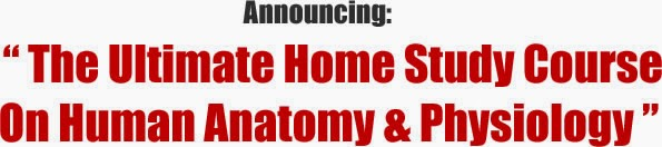 Download Video Human Anatomy And Physiology Study Course