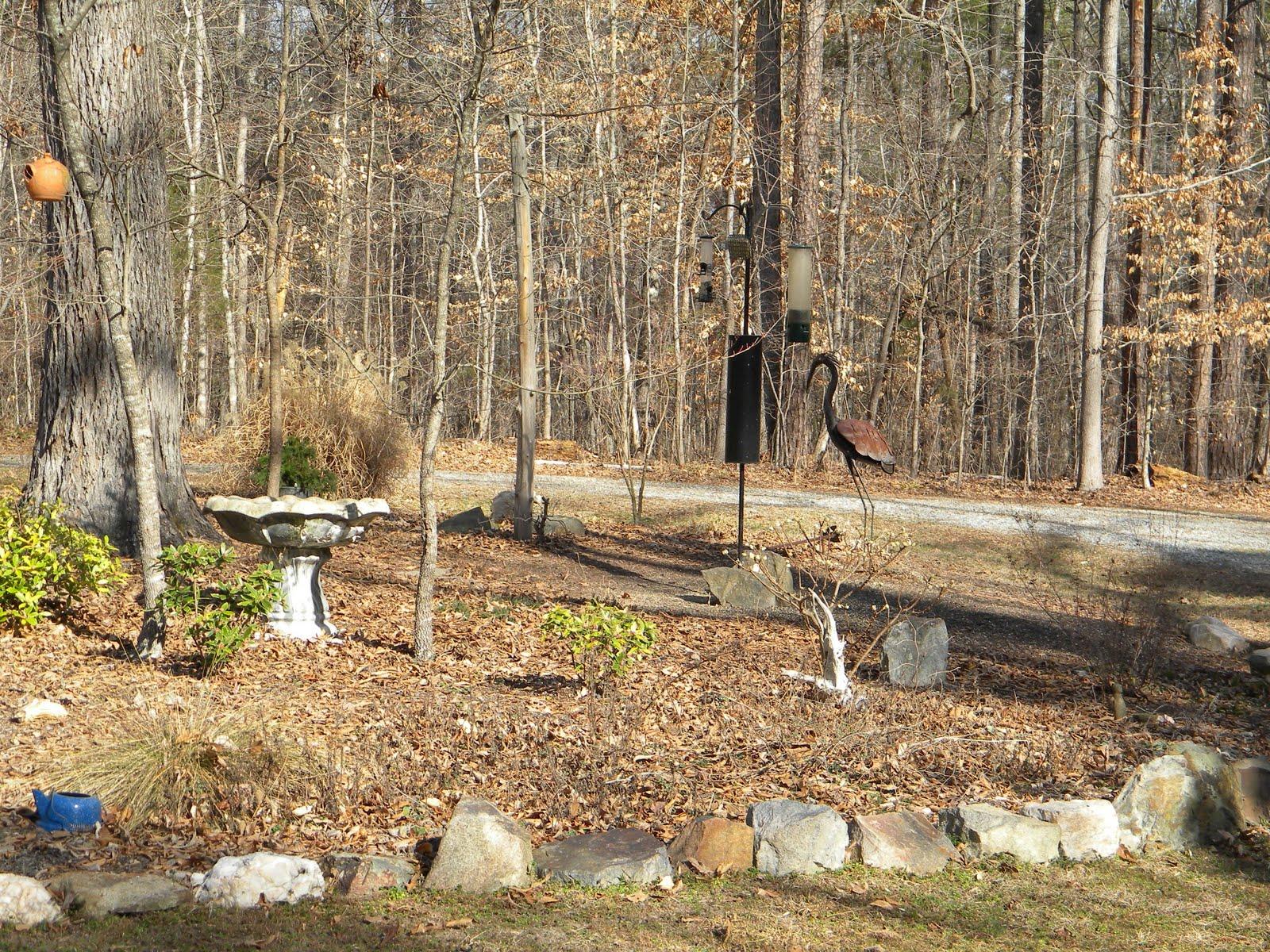 slow birding february 2011