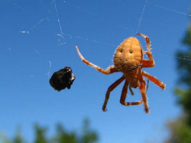 murrieta365 said the spider to the fly