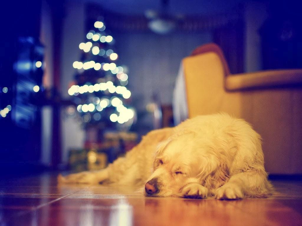 """<img src=""""http://1.bp.blogspot.com/--NJvZ4W1EJI/UtqcQ39Ax1I/AAAAAAAAIz0/VmaIjFDxPW8/s1600/sleepy-dog.jpeg"""" alt=""""sleepy dog"""" />"""