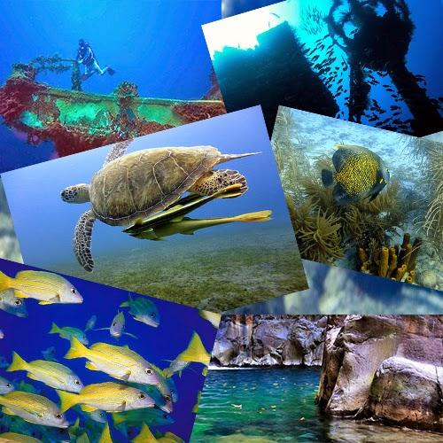 Plongée en Guadeloupe à Bouillante