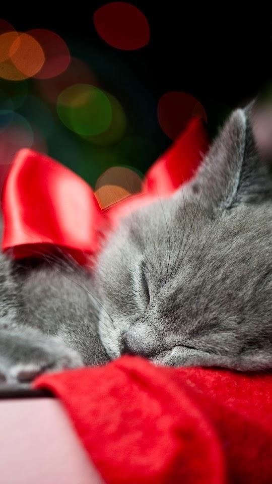 Grey Kitten Red Ribbon Christmas Present Bokeh  Galaxy Note HD Wallpaper