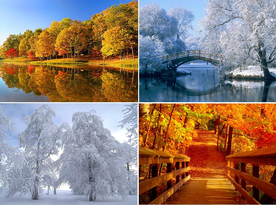 Sheeries Warten Auf Den Herbst Winter