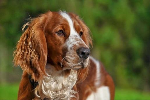 Jak przedłużyć życie psu