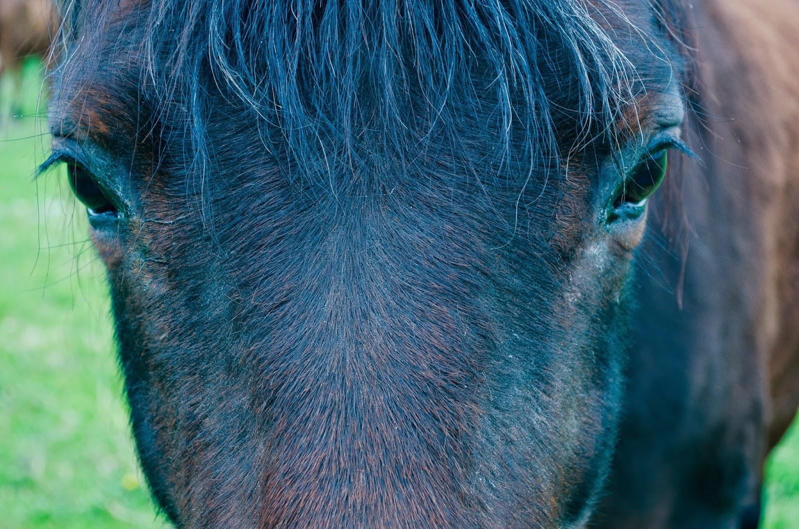 aesthetic fauna // equine