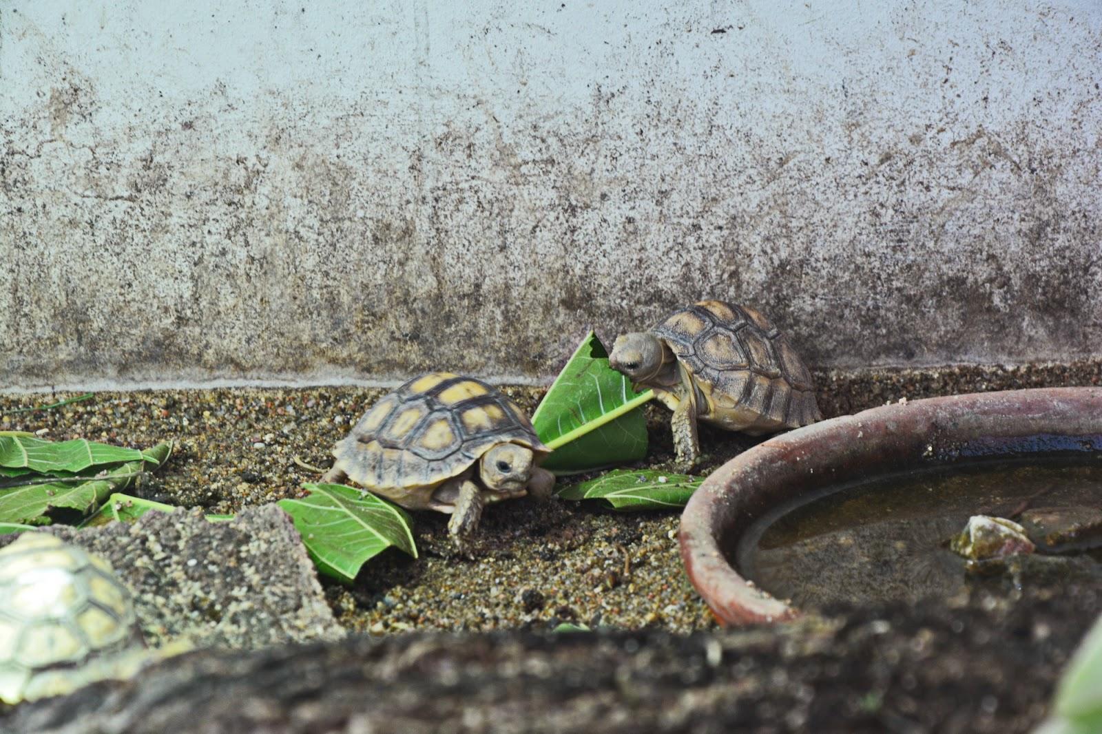 two tortoises