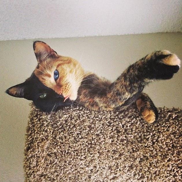 beautiful-cat-4