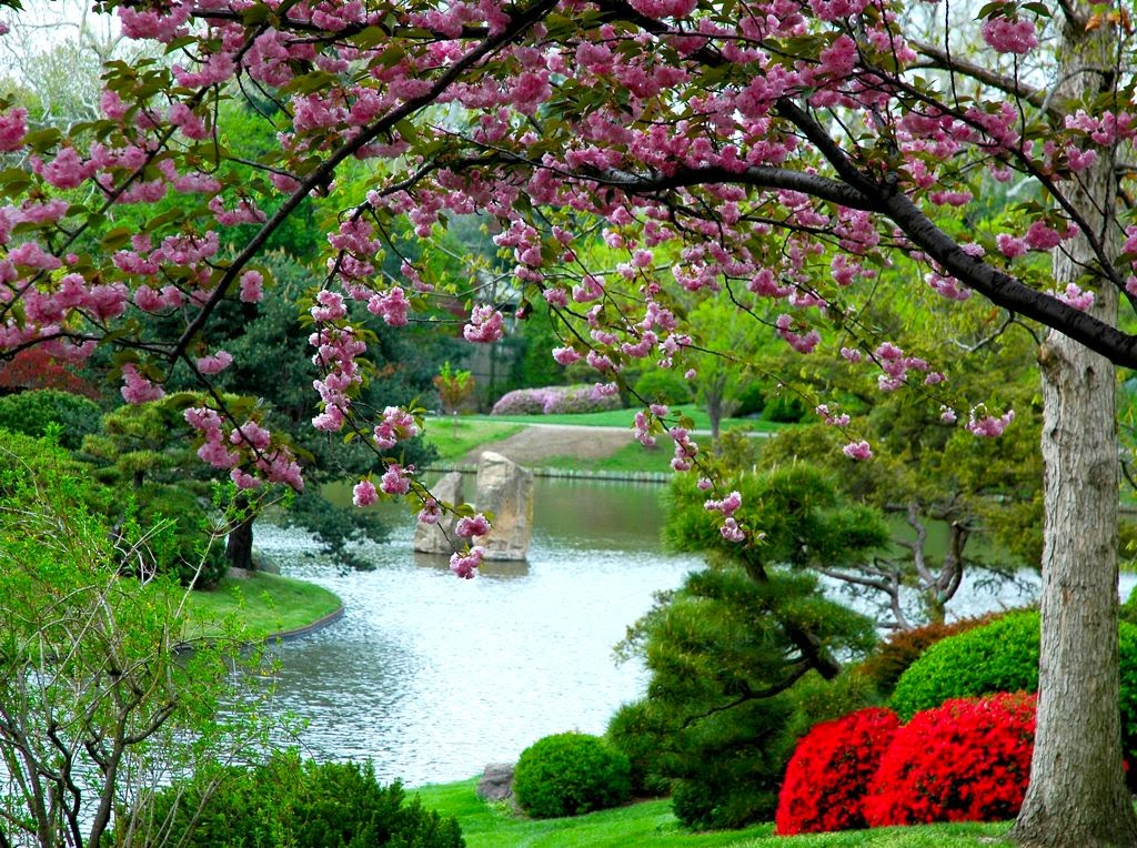 Garden fancy an idea occurs uh oh hard work and thinner for Flowers for japanese gardens