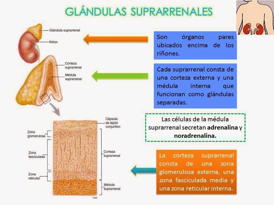 cuales esteroides anabolicos mas usados