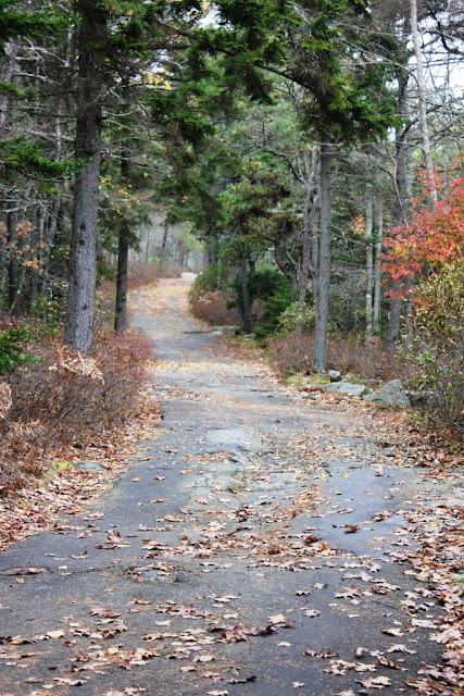 Morse Mountain trail