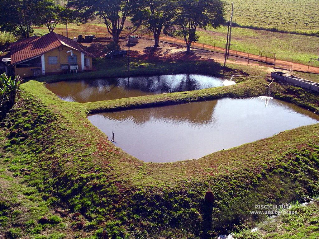 Mestrado em agroneg cios piscicultura excelente para o for Construccion de estanques para piscicultura