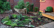 Sedums and raised beds
