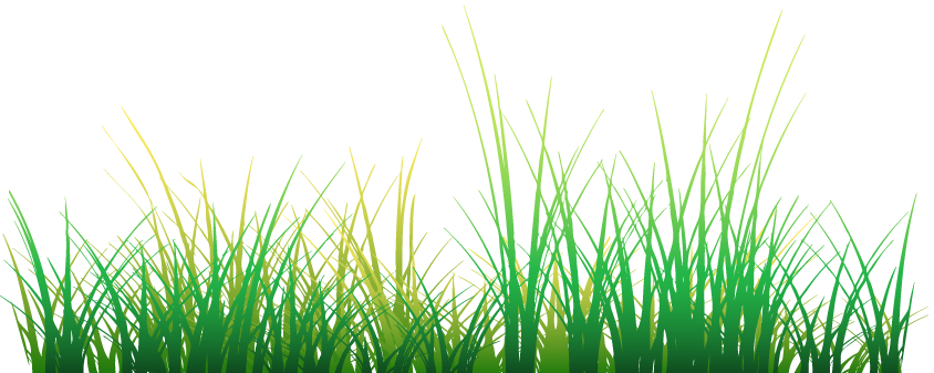 Flower and Grass PNG