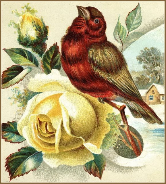 Little Birdie Blessings : Sweet Birds and Lovely Flowers