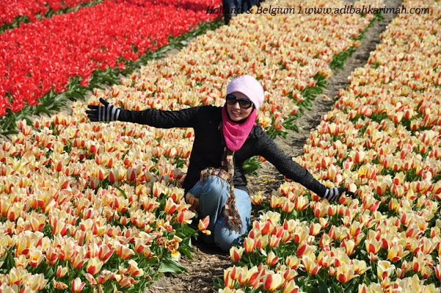 holiday to holland and belgium with premium beautiful at keukenhof with land of tulips flowers