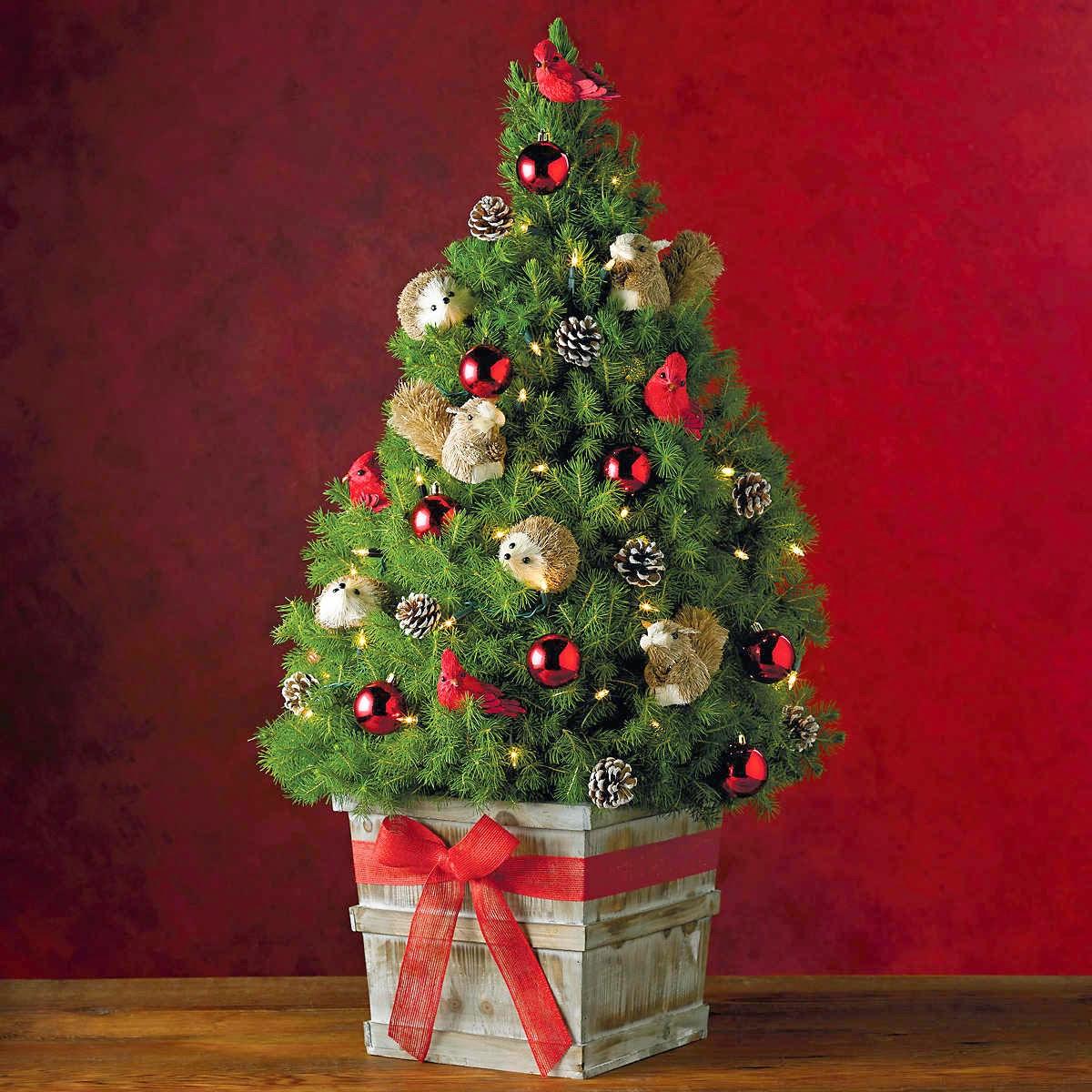 Memilih Pohon Natal