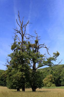 Baum auf einer der Wiesen