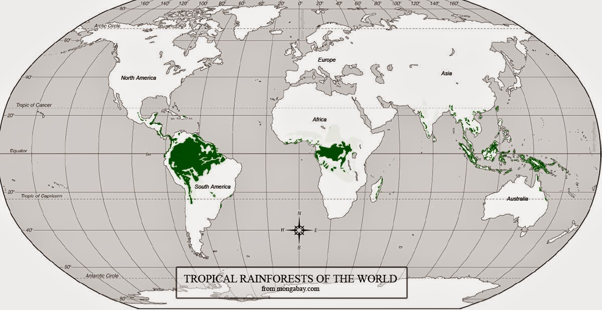 why the rainforest of the world The amazon rainforest is home to over 2,000 species of animals some are found in the trees like the gold lion tamarin, while others are found in the amazon rainforest river like the dolphin a golden lion tamarin in the amazon rainforest in brazil the capybara is similar in appearance to cavies.