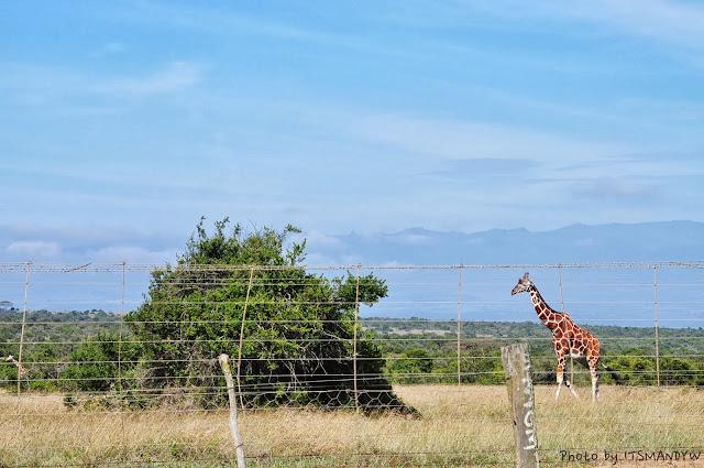 肯亞旅遊攻略