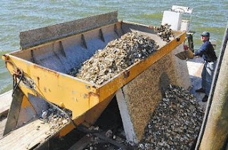 curt felix oyster restoration