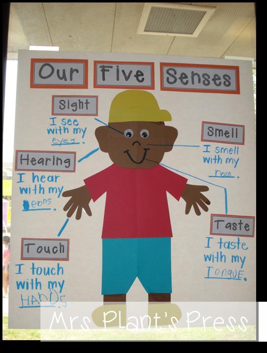 5 Senses and The 5 Little Ducks - Primary Press