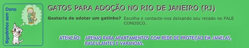 GATOS PARA ADOÇÃO NO RIO DE JANEIRO E NITERÓI (RJ)