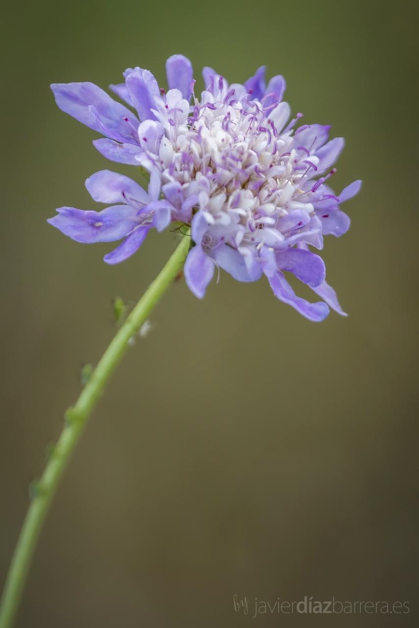 Un estuche como azul Una planta Dos Cuatro fotos Una  - Plantas De Flores Azules Fotos