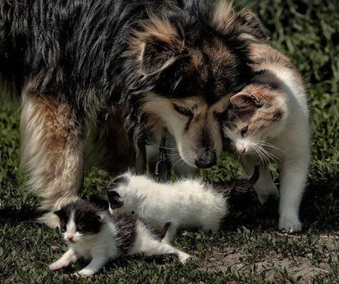 Kittens and their mother hanging out with their uncle