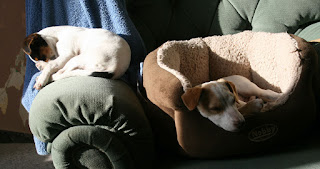 Two snoozing puppies