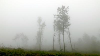 Celtas con niebla