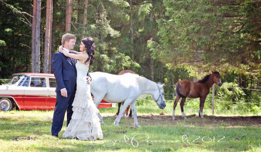 pulmafoto-pruutpaar-valge-hobune-chaika