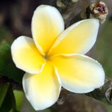 Fiore di Tiare'