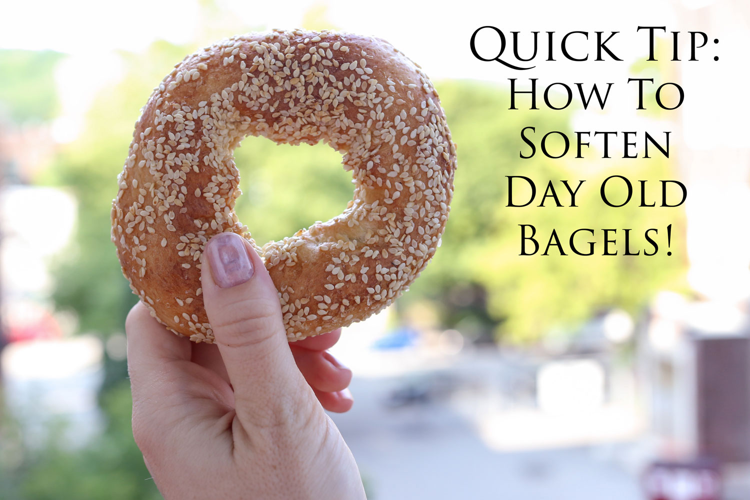 Quick Tip: How To Soften Day Old Bagels - Barefeet In The Kitchen