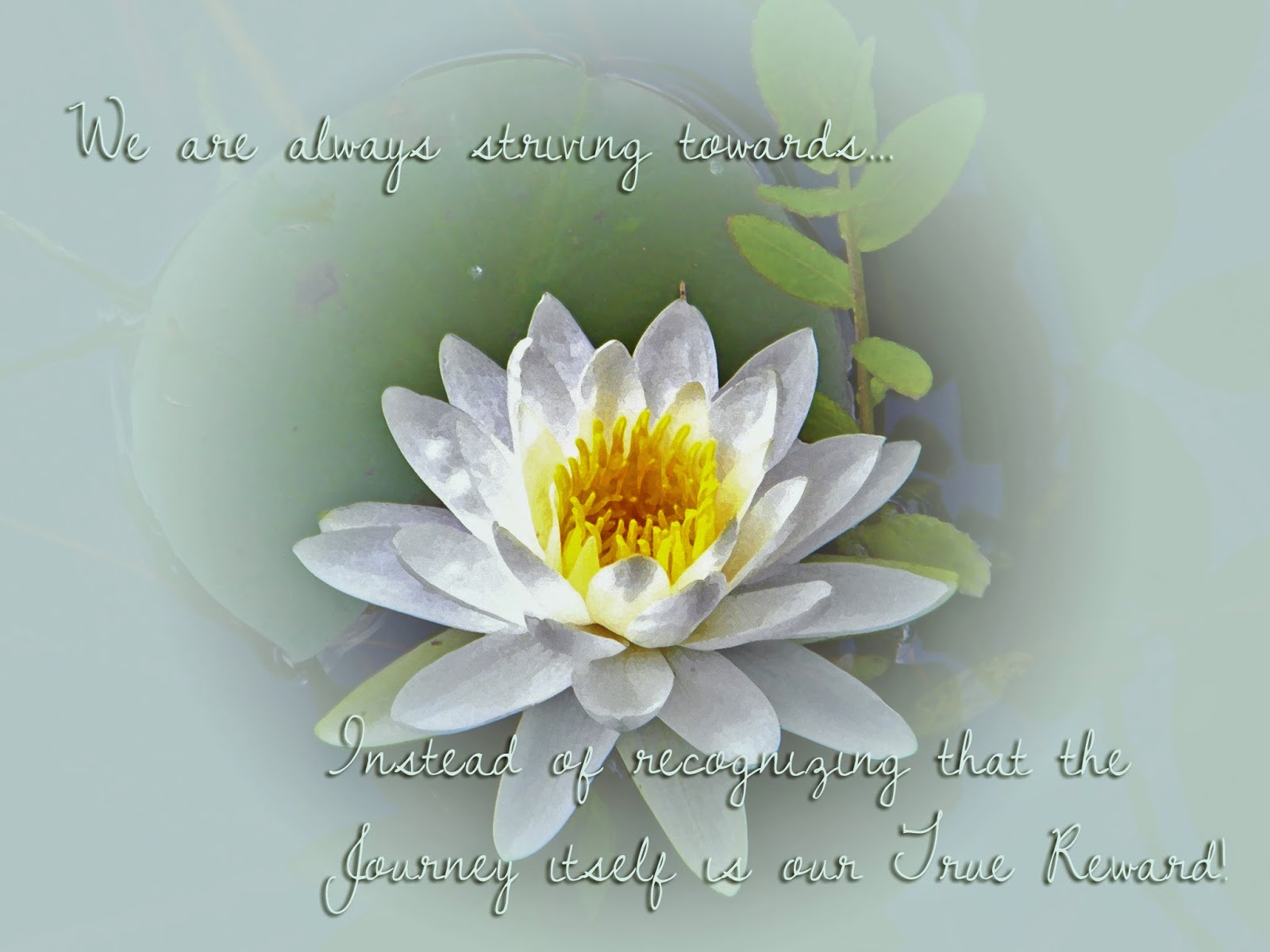 The Journey-- photo of water lily with inspirational message