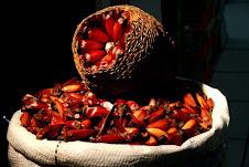 Flora Bacia Taquari-Antas - Fonte: Aepan-ONG