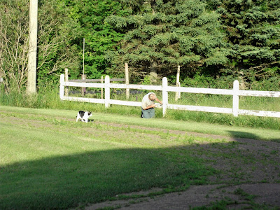 a cat, a fence and a man