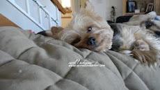 ArtMuse Dog
