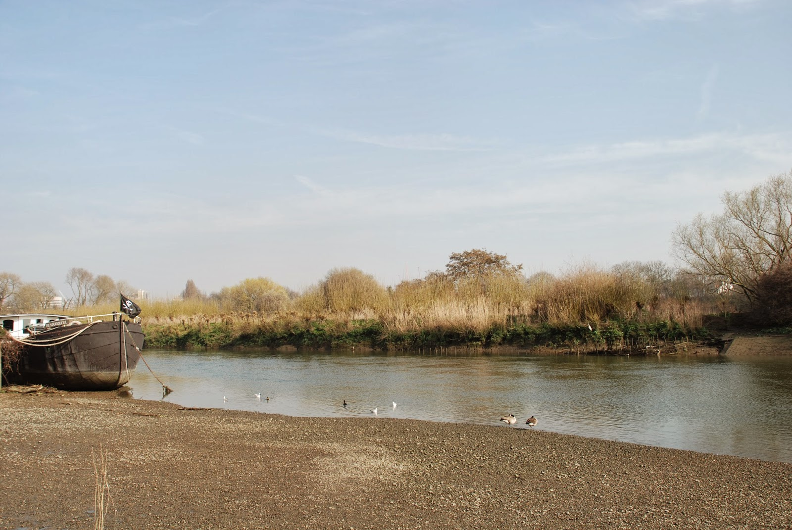 Best dog walks in West London: Part 2: Thames Tow Path Chiswick/ Hammersmith/ Barnes