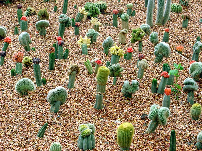 TEMY Z0N3 Cactus