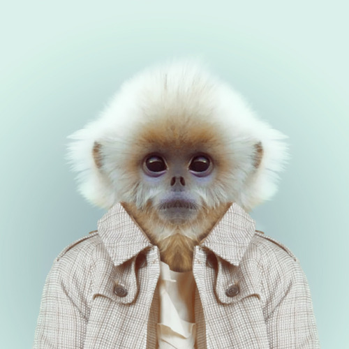 new Pets Fashion