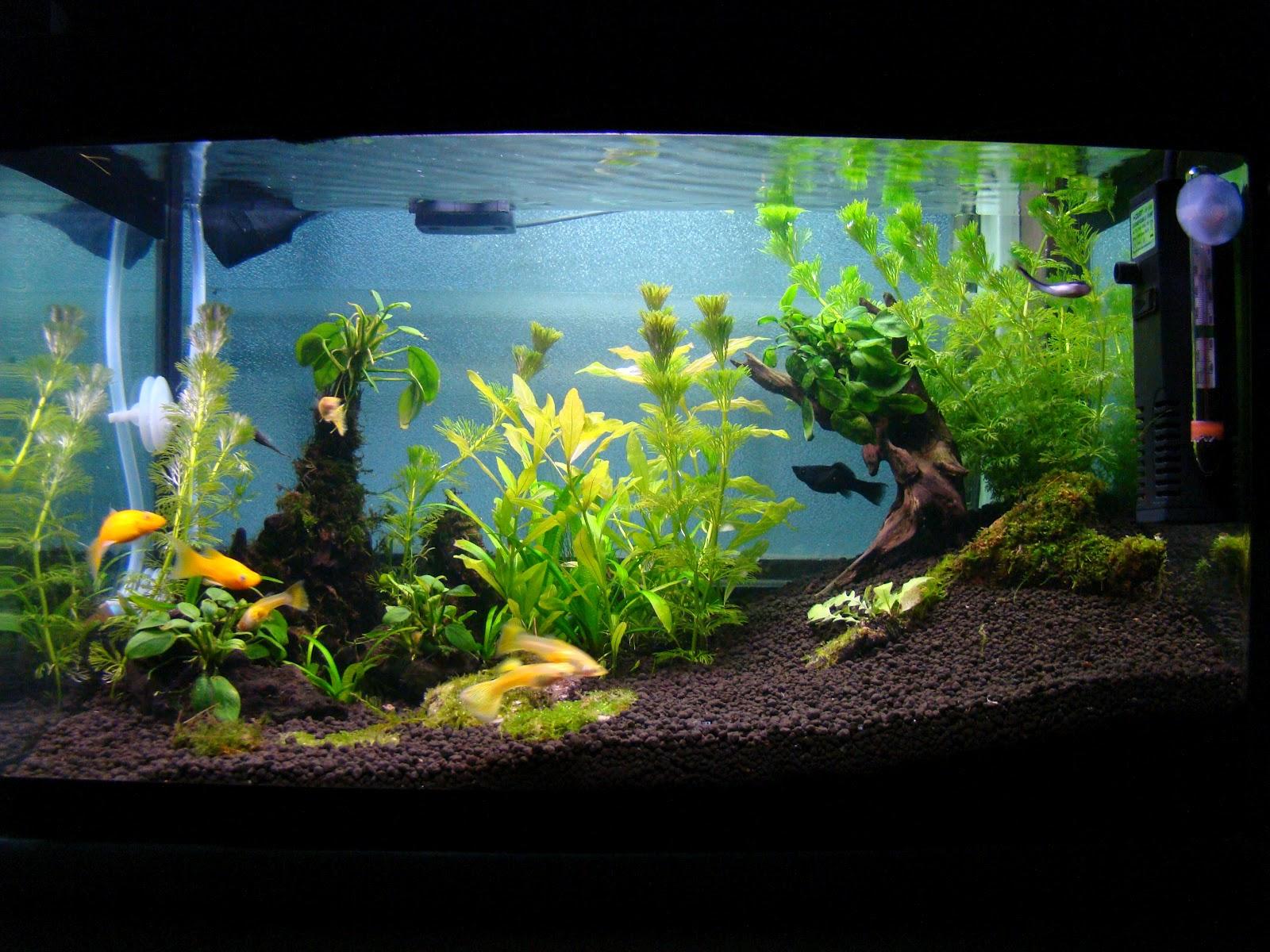 AquaBie: Aquascape - Planted Tank (Golden Shine)
