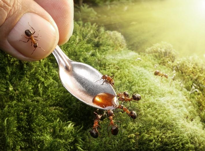 Imagem de Formigas  na unha