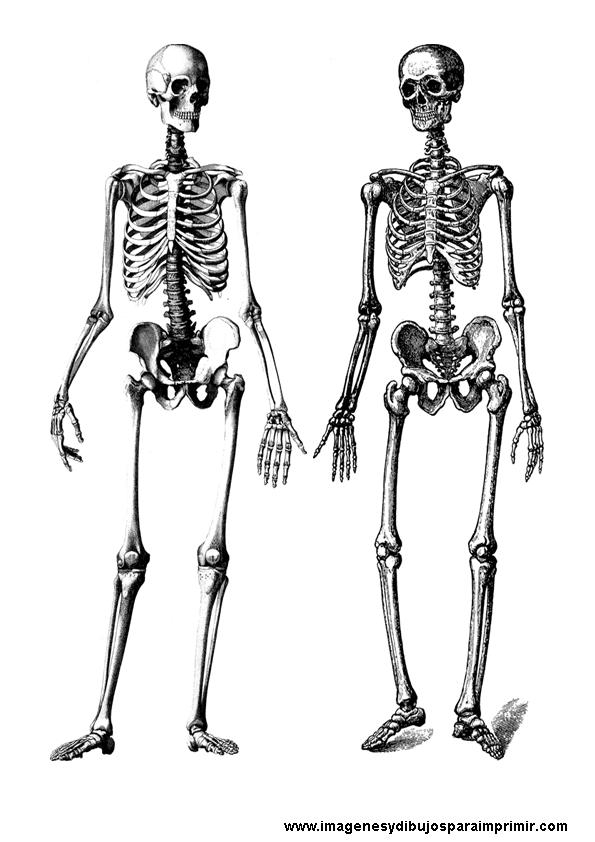 Esqueleto Dibujo a Color Dibujos de Esqueletos