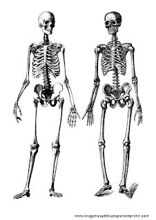 Dibujos de esqueletos