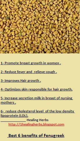 Fenugreek Benefits:Fenugreek Benefits for health,medicinal benefits and informations