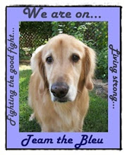 Join Team Bleu!