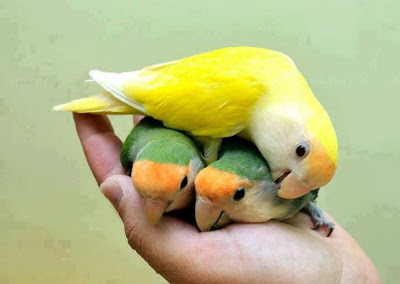 friendship-kavithai-photo